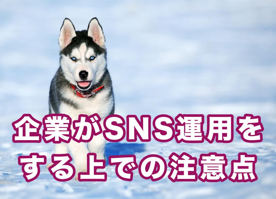 沖縄の企業がSNS運用を行う際の注意点