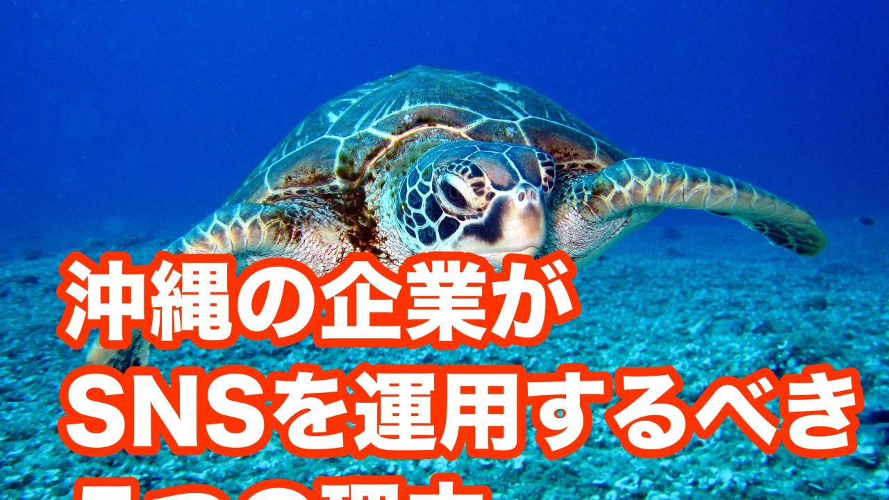 animal-aquatic-marine-life-1618606