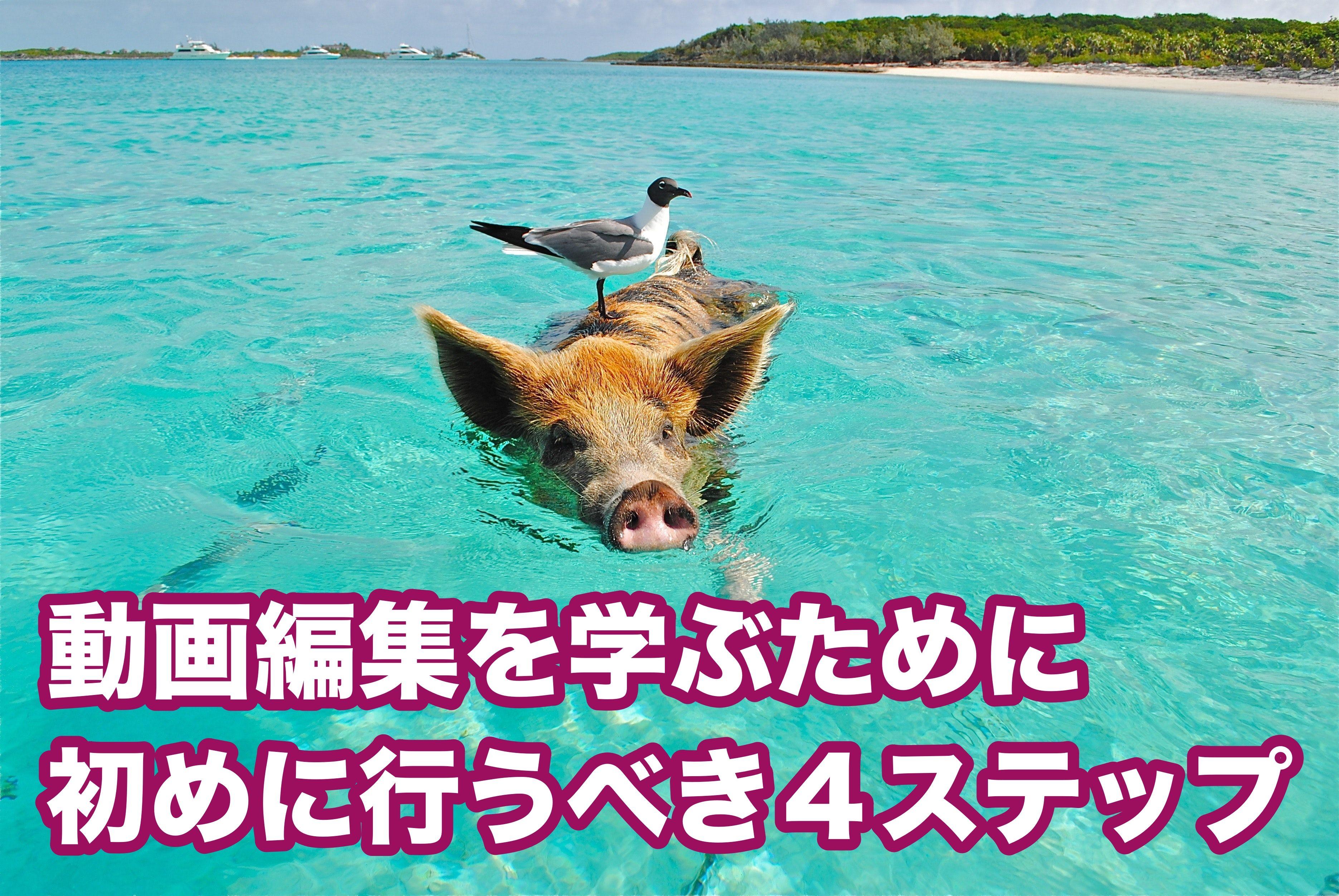 沖縄で動画編集を学ぶために初心者が行うべき4ステップ